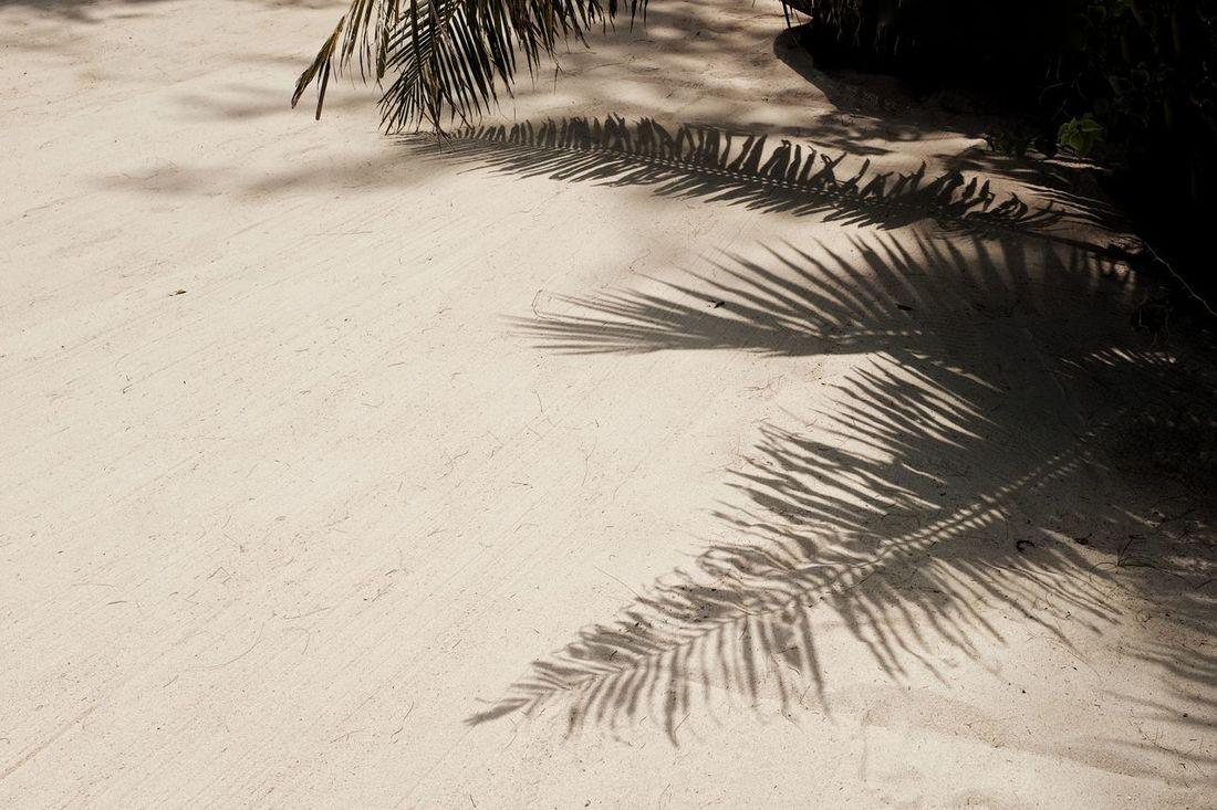 สวัสดีครับ - sàwàddee kráb ~ 33 ~ Happy Songkran Festival! Beachphotography Day Holiday Jacklycat®2017 Light And Shadow Nature O-Yeah😊😄😆 Outdoors Palm Tree Sand Sand Dune Sea Sea Life Shadow Spotted In Thailand Streetphotography Tree Thank You My Friends ✨✨🌶✨✨ BYOPaper! Sommergefühle