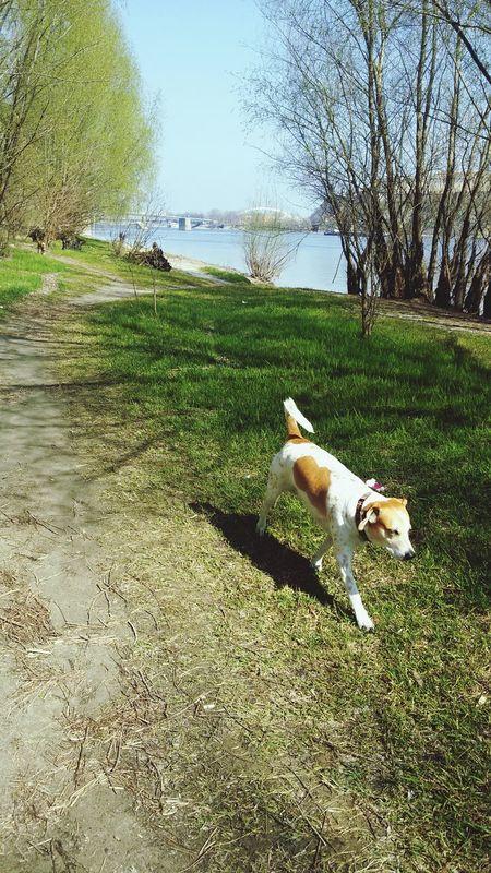 Watchin' The Dogs Blue Danube Petrovaradinskatvrdjava Enjoying Life Hello World