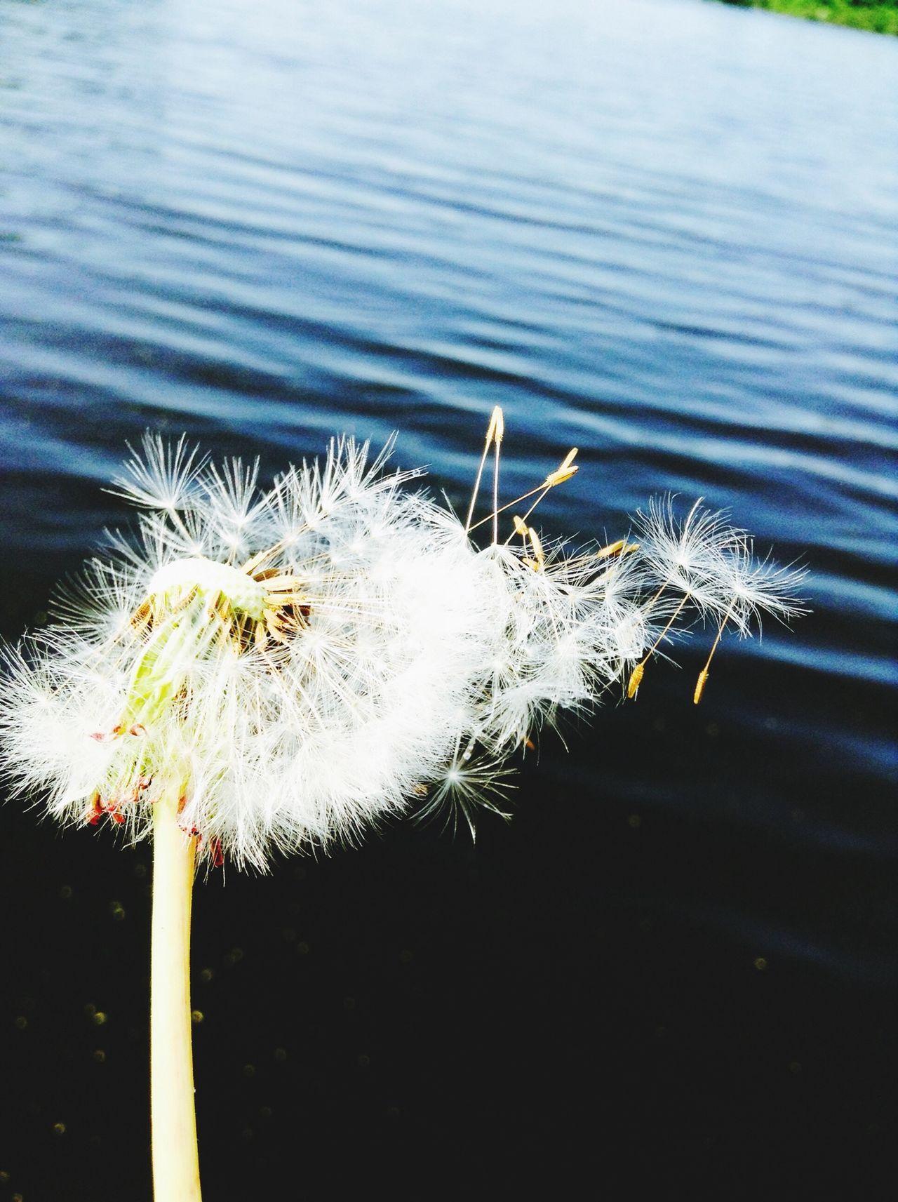 Summer Watter Flower Fly