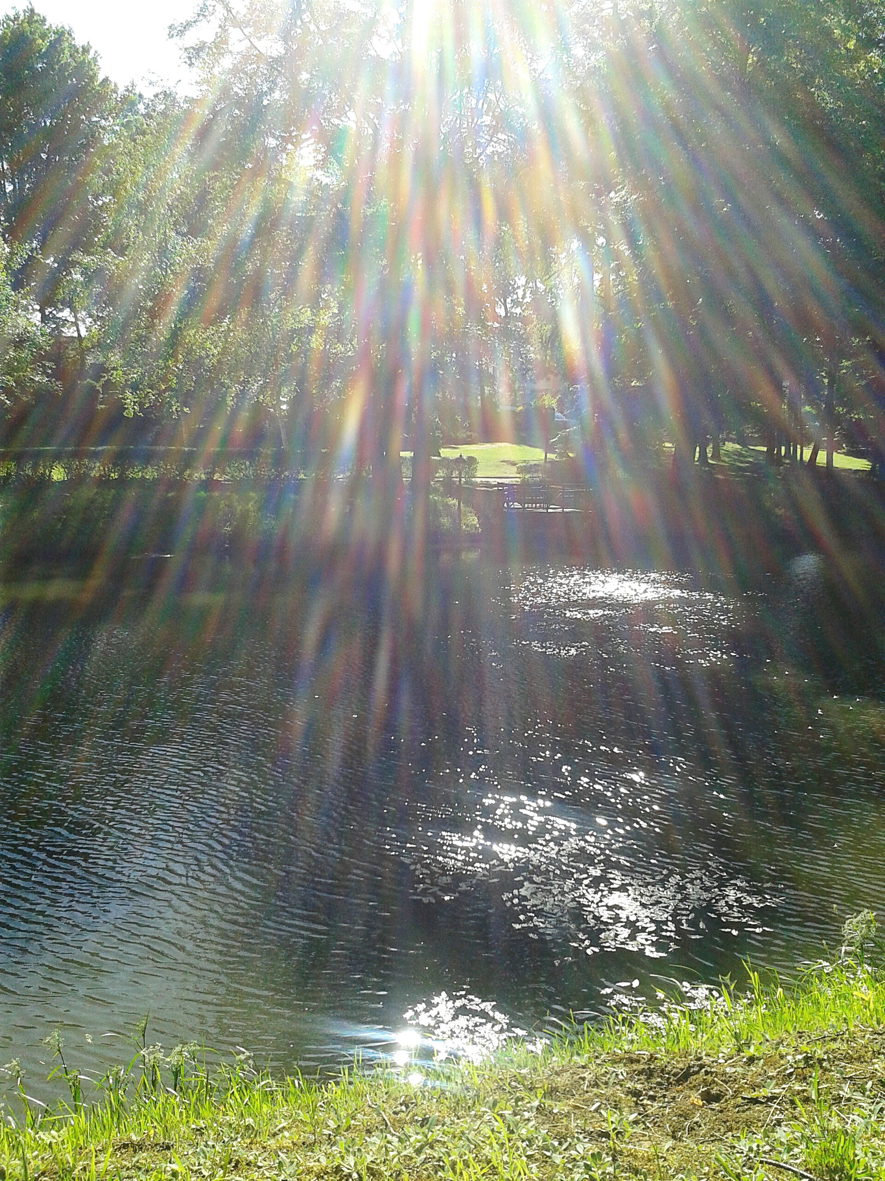 sun, sunbeam, sunlight, lens flare, water, tree, tranquility, sunny, tranquil scene, grass, reflection, beauty in nature, growth, nature, scenics, bright, green color, idyllic, day, outdoors