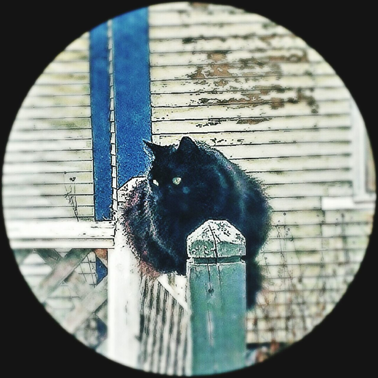 domestic cat, pets, domestic animals, feline, animal themes, one animal, cat, mammal, whisker, no people, indoors, day, tire, close-up