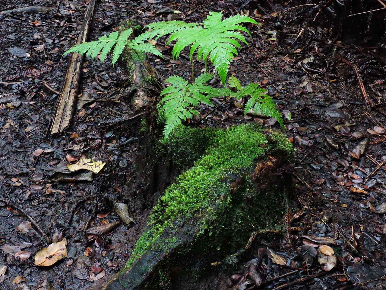 Beauty In Nature Close-up Day Fern Fragility Green Color Growth High Angle View Leaf Nature No People Outdoors Plant Root Thick