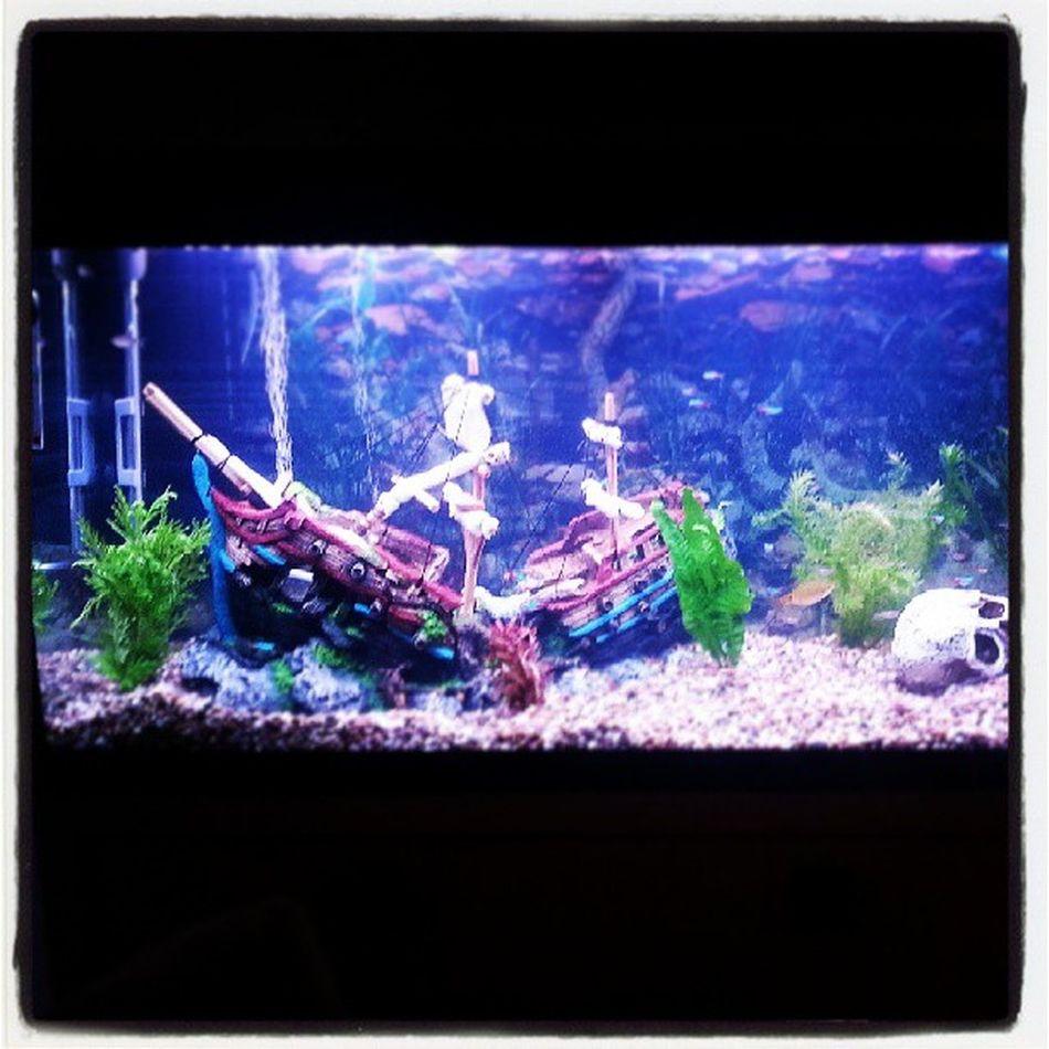 Mytank Fishtank Lovefish Sunkship skull nemo smallfish tanktank fishtankwithfish fishtankwithwater