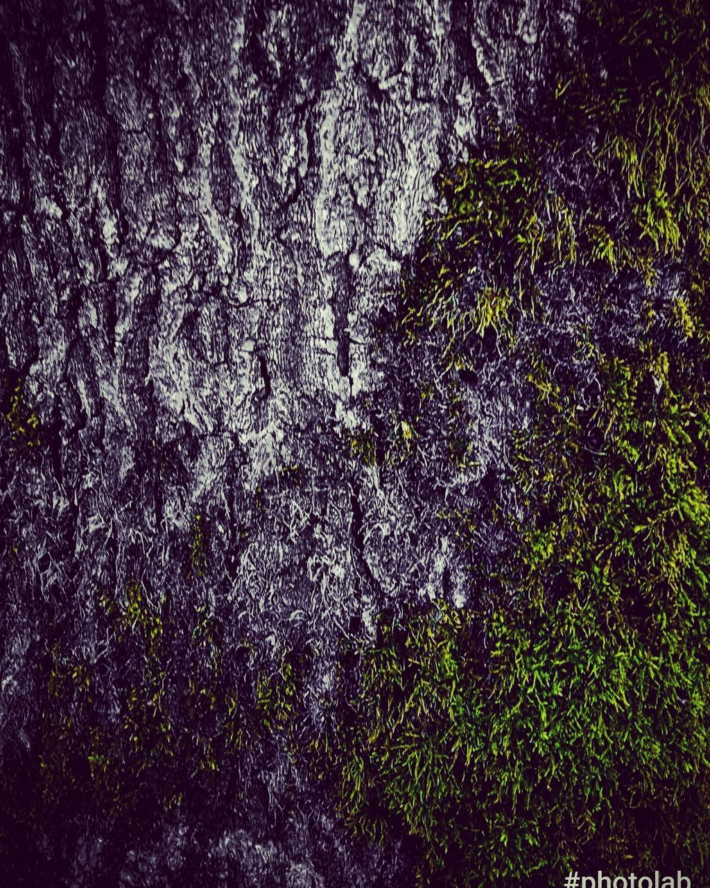full frame, tree, backgrounds, growth, textured, nature, no people, tree trunk, ivy, outdoors, close-up, plant, day, beauty in nature, freshness