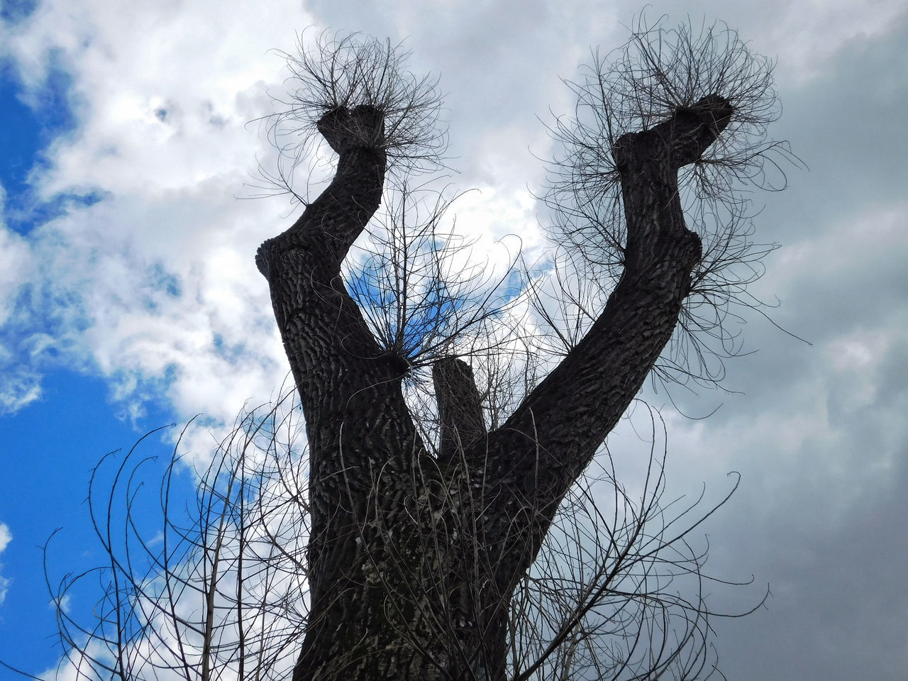 Bare Tree Beauty In Nature Branch Cloud - Sky Day Dead Tree Hairy  Low Angle View Monster Nature No People Outdoors Sky Snag Strange Tree Tree Trunk Y