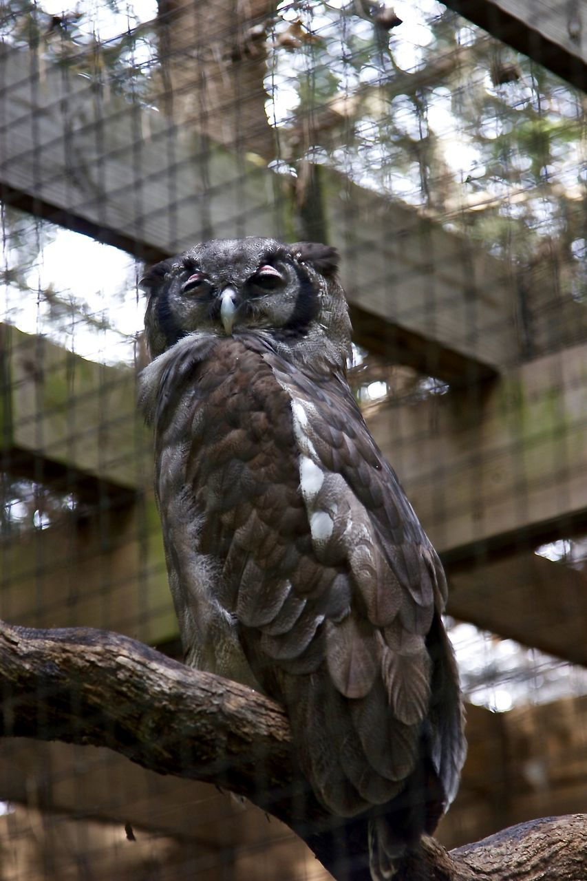 Close-Up Of Owl Perching At Zoo
