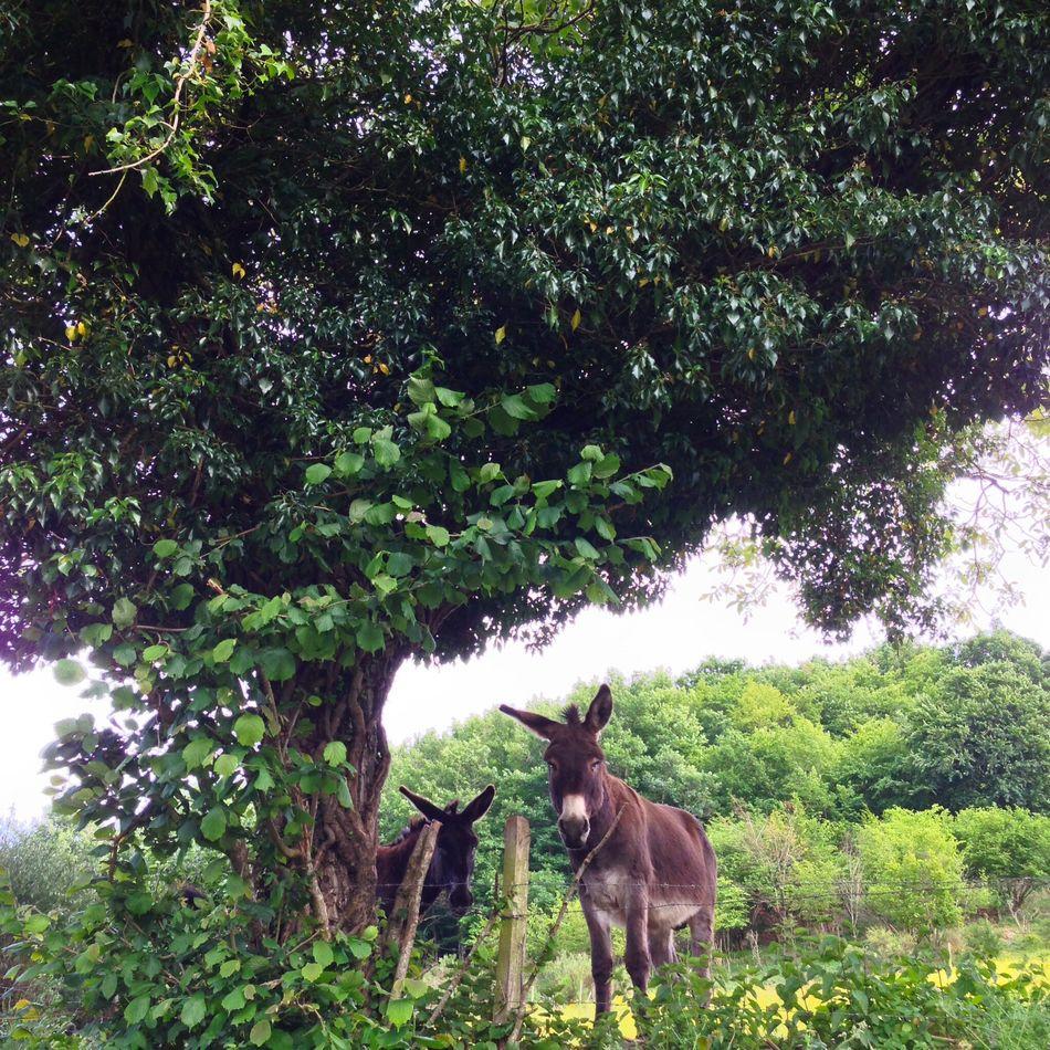 Beautiful stock photos of donkey, Day, Domestic Animals, Donkey, Full Length