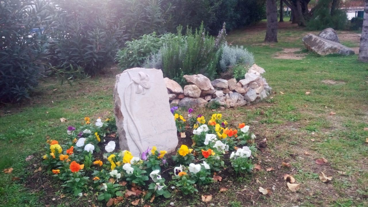 flower, cemetery, tombstone, grave, outdoors, front or back yard, plant, no people, grass, day, nature, memorial, tree, flowerbed, crocus