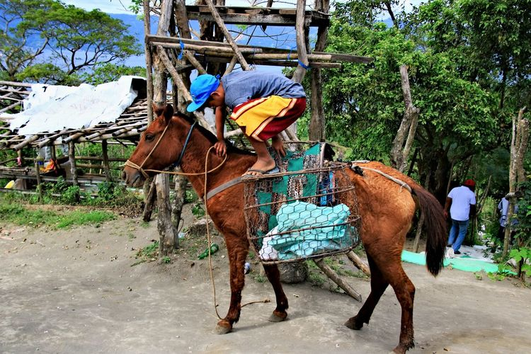 Animal Themes Domestic Animals Donkey Herbivorous Horse Kid Outdoors Riding Saddle Tree Working Animal Child Travel Travel Destinations Travel Photography Street Photography Connected By Travel An Eye For Travel