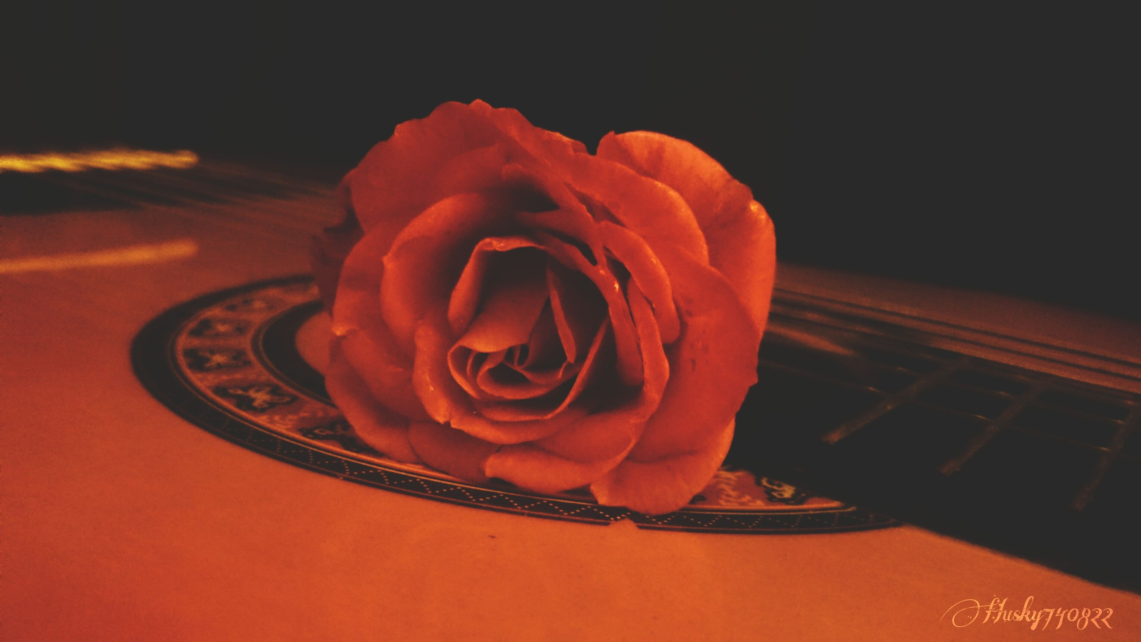flower, rose - flower, petal, flower head, freshness, fragility, no people, beauty in nature, close-up, indoors, nature, day