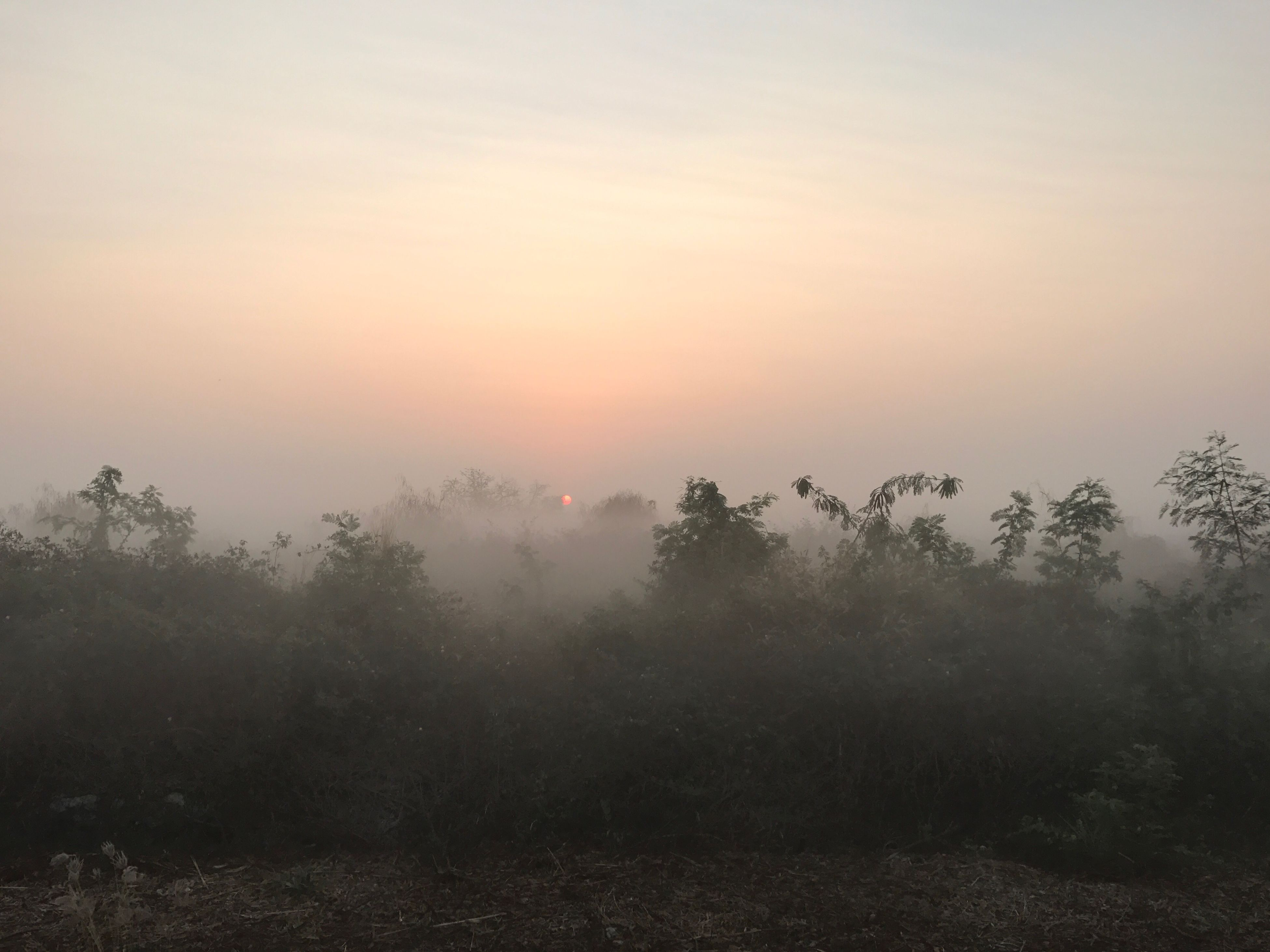 nature, tree, beauty in nature, fog, sunset, hazy, no people, tranquility, outdoors, scenics, tranquil scene, sky, day