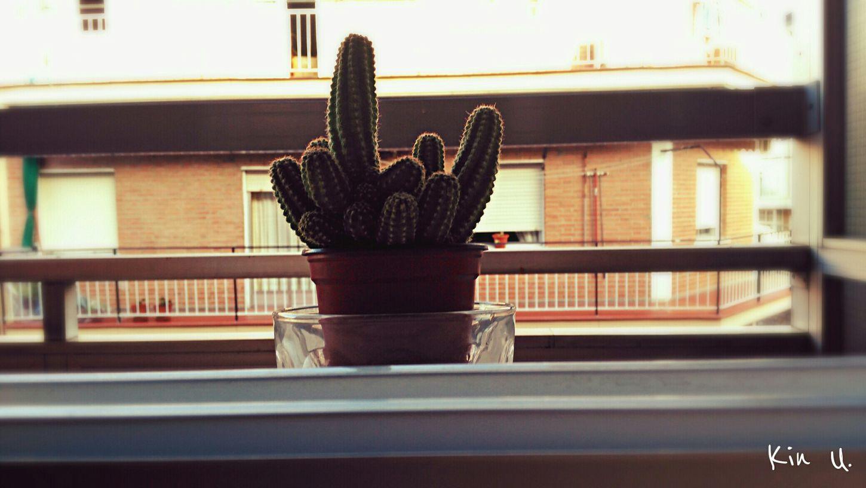 My little cactus. Cactus Enjoying Life Cactusporn Taking Photos I Love Cactus I Like This Pic