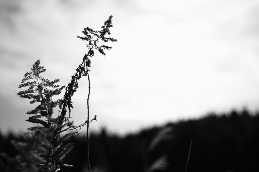 The recollection Japan My Photography Japanese  X-Pro1 Voigtlnder Fujifilm X-Pro1 Voightlander Nokton Classic 40mm/F1.4 SC EyeEm Nature Lover Black & White Black And White Black And White Photography B & W  EyeEm Best Shots - Black + White B & W Photography Plants Plant Nature Nature Photography Nature_collection