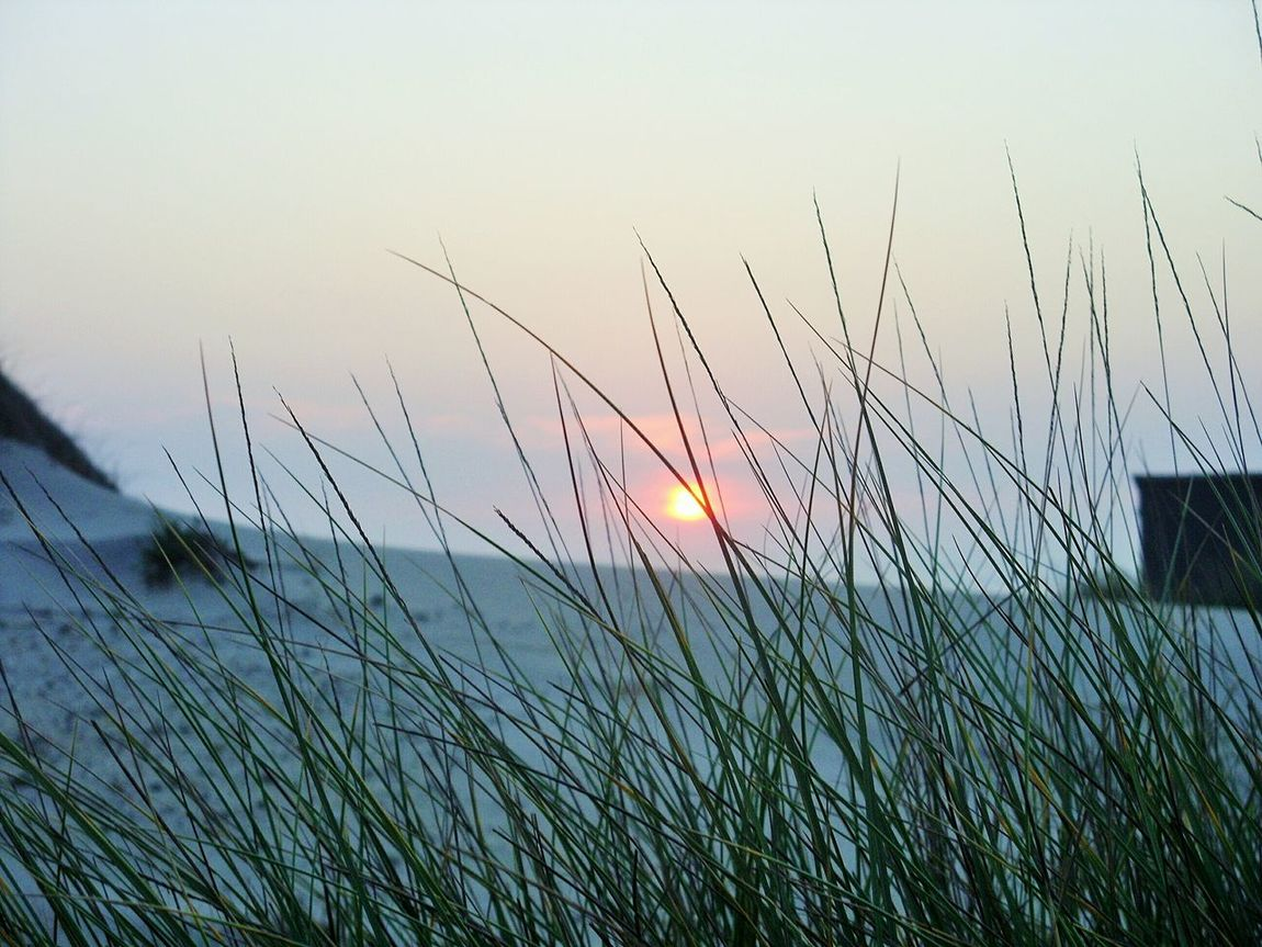 Sunset at the beach Beach Grass Sunset Atlantic Ocean Praia Da Costa Nova Costa Nova Portugal Photography Photooftheday First Eyeem Photo Nofilter Focus On Foreground The Great Outdoors - 2016 EyeEm Awards