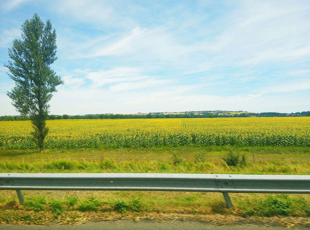 Sunflower Nature Landscape_photography Landscape #Nature #photography France