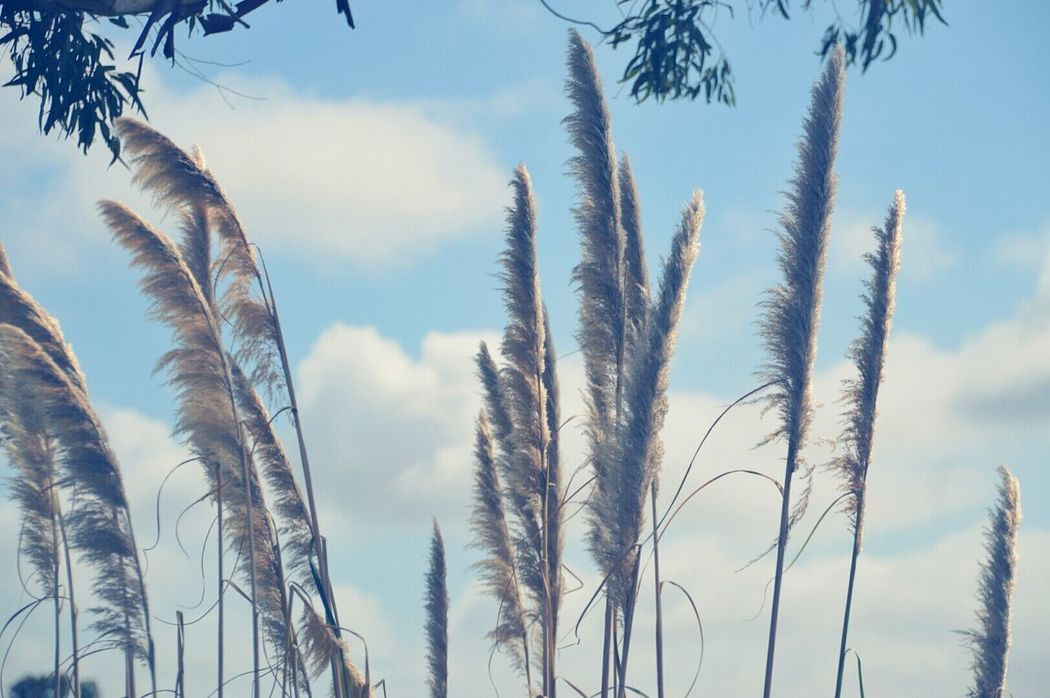 Country Nature Summer ☀