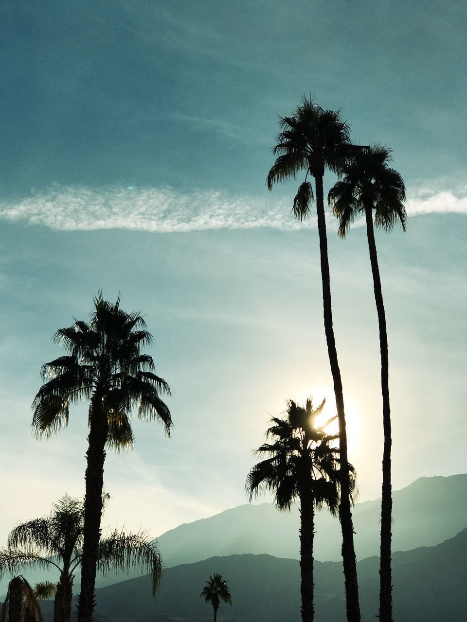 palm tree, tree, beauty in nature, scenics, tree trunk, tranquil scene, nature, tranquility, sky, growth, silhouette, outdoors, mountain, cloud - sky, no people, sunset, day