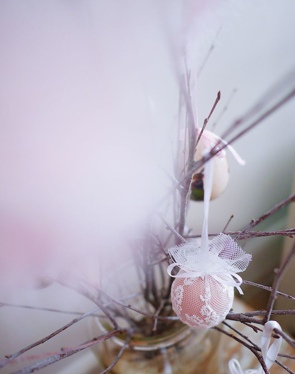 Close-up Fragility No People Plant Focus On Foreground Nature Beauty In Nature Day Indoors  Flower Home Interior Pastel Colors Still Life Decoration Backgrounds Egg Freshness Ornamental Still Softness Branch Feather  Feathers Birch Textured