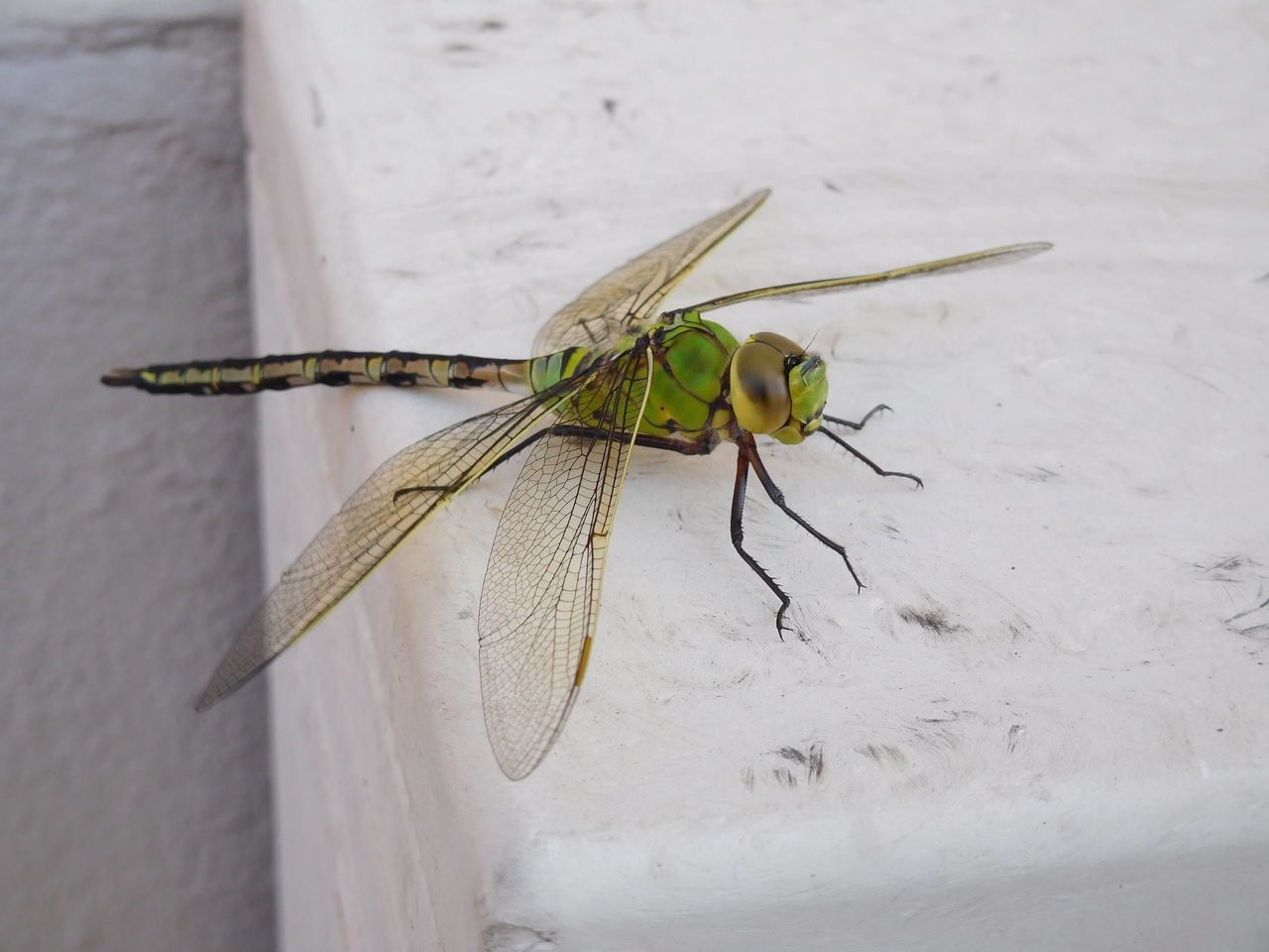 dragonfly Close-up Day Detail Dragonfly Green Insect Macro Nature