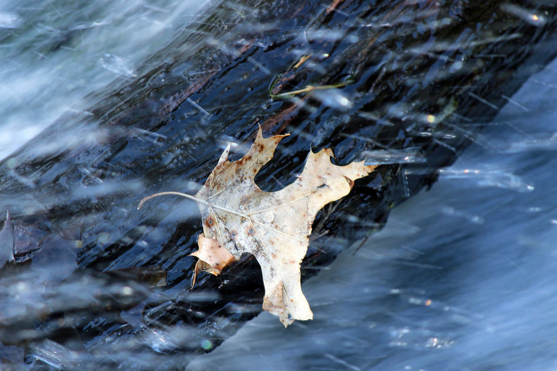 Clinging to a lifeboat Beauty In Nature Blue Water Climate Conditions Endurance High Angle View Lake Leaf Log Nature Oak Leaf Outdoors Reflection Season  Selective Focus Spring Stamina Texture Water Water Drops Waterfall Weather Wet Wisconsin