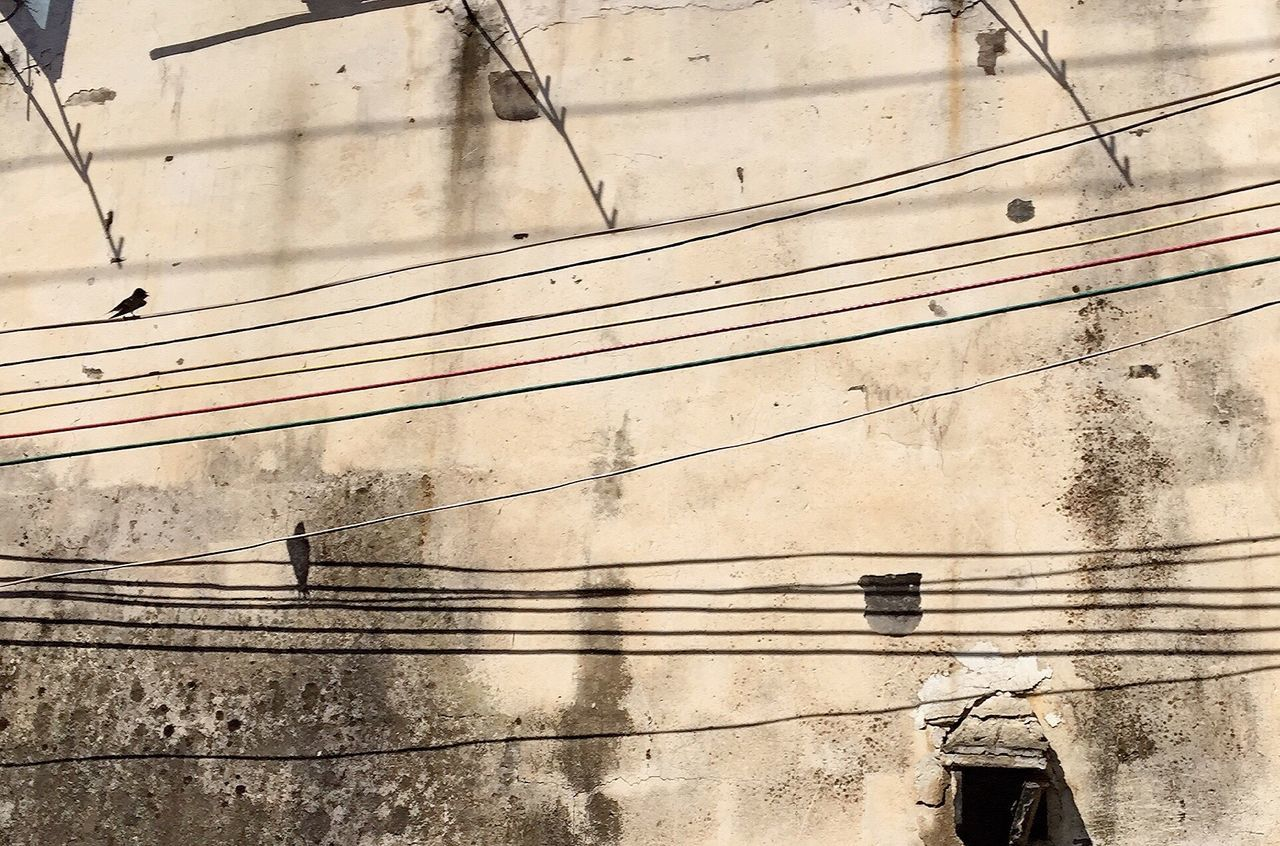 Break The Mold Cable Power Line  Power Supply Outdoors Electricity  Day Telephone Line No People Electricity Pylon Shadow Technology Building Exterior Nature Bird Animal Themes