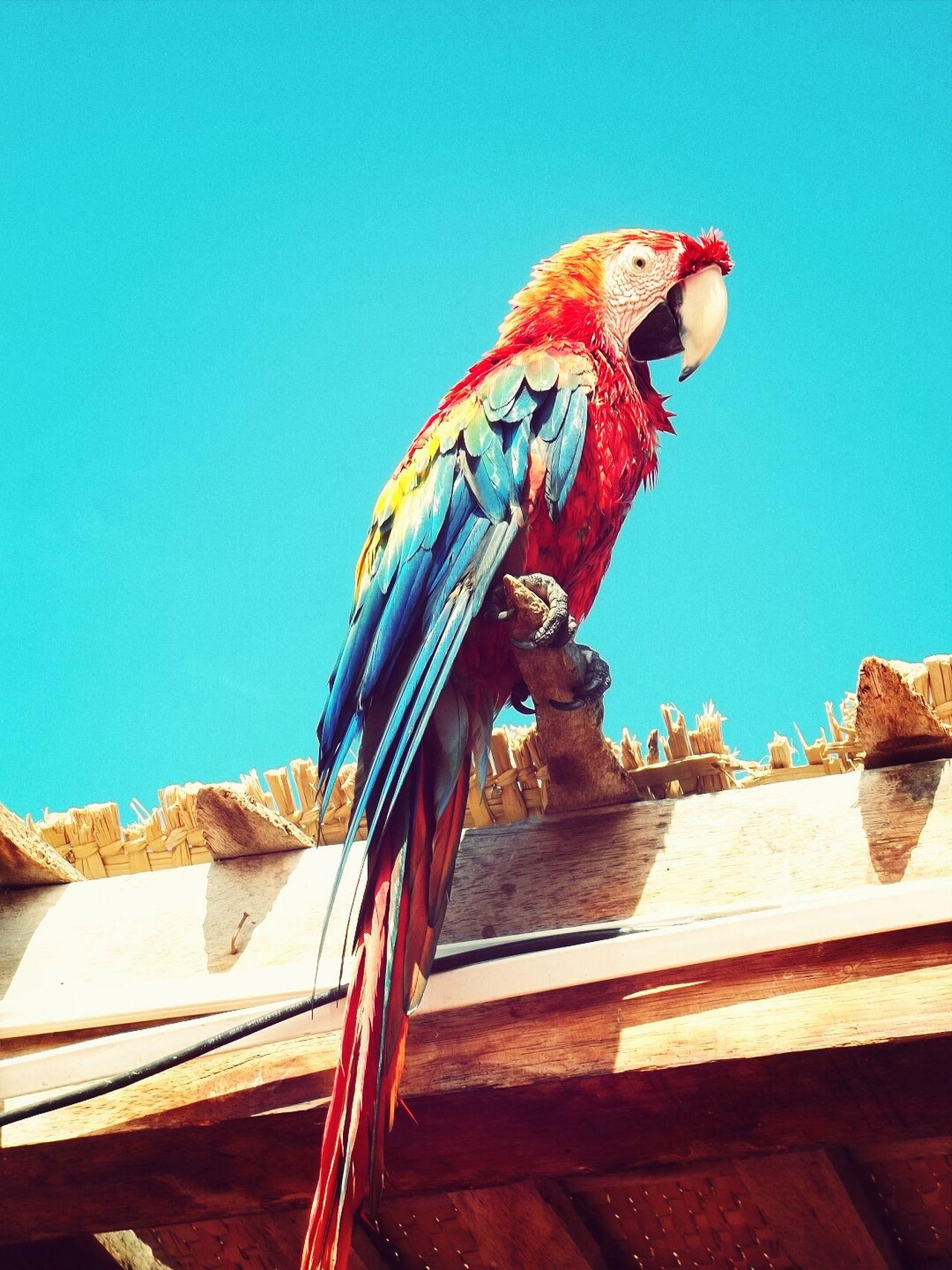 Animals Aves Birds Animales