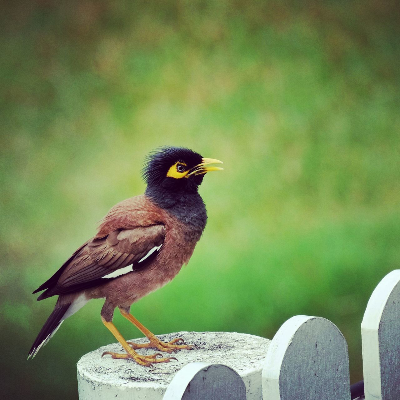 bird, animal themes, animals in the wild, perching, one animal, animal wildlife, no people, outdoors, day, nature, close-up