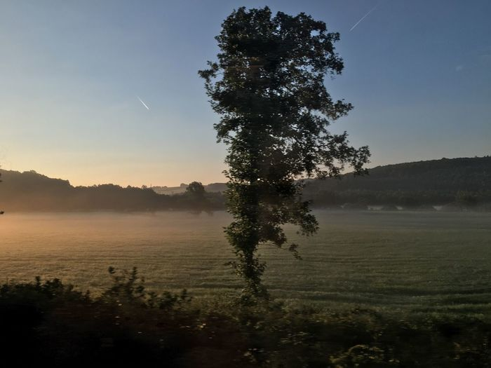 Morning fog seen from train window Tree Nature Tranquility Beauty In Nature Tranquil Scene Landscape Growth Scenics No People Field Outdoors Sky Clear Sky Morning Light Morning Sky Morning Fog Germany German Landscape Train Fulda Valley Grass