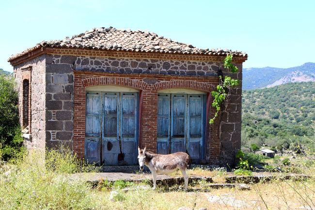 Abandoned Abandoned Buildings Abandoned House Abandoned Places Architecture Built Structure Day Donkey Donkeys Façade Grassy Grazing Greece Hills Lesbos Lesvos Mediterranean  Mule Nature No People Outdoors Run-down Tranquility