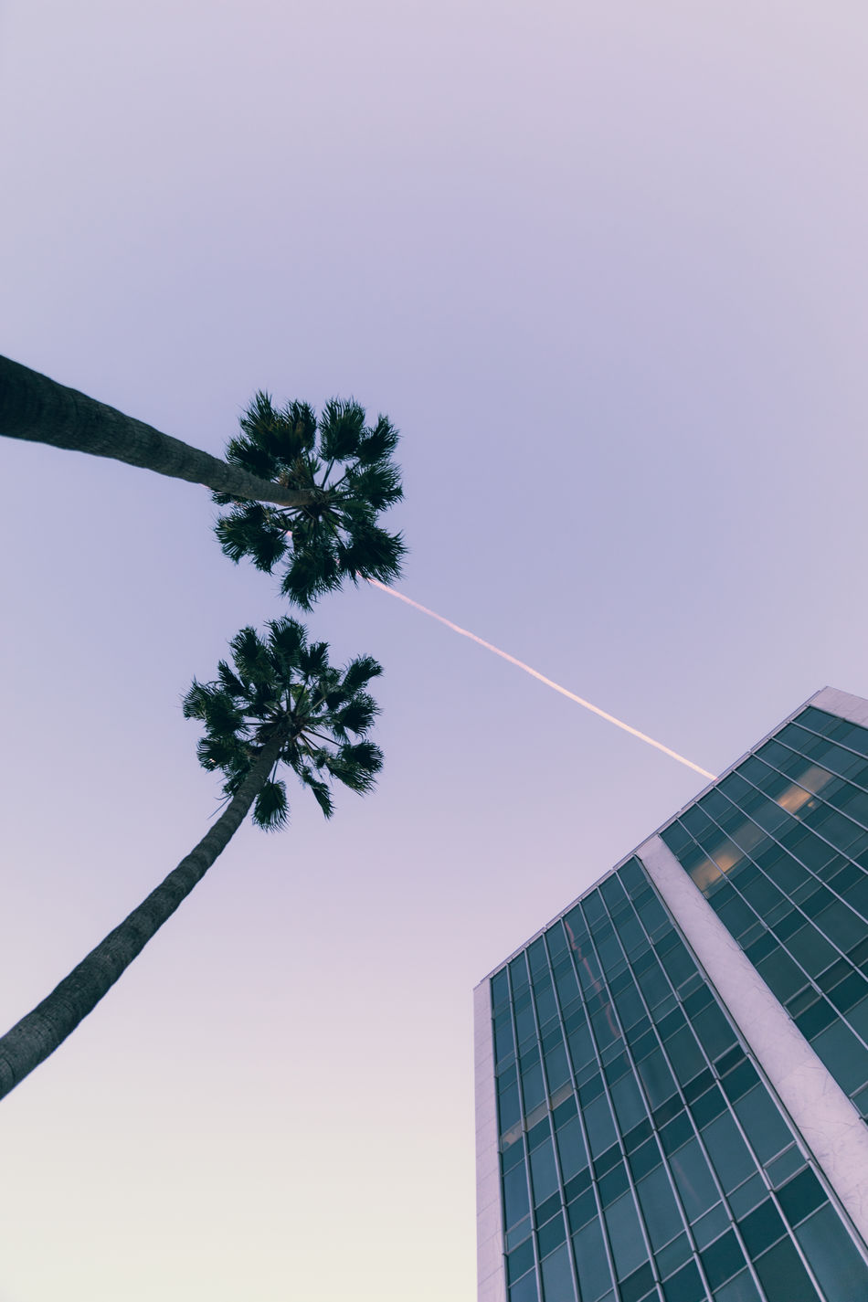 In Beverly Hills, California Architecture Built Structure Clear Sky Enjoying Life Eye4photography  EyeEm Best Shots Hanging Out Hello World Lines Low Angle View No People Outdoors Palm Tree Photography Sky Tall Tree Vapor Trail