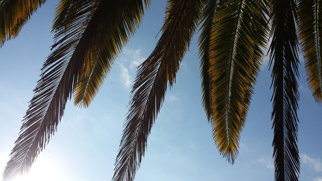 Beautiful stock photos of jamaica, Cloud, Day, Growth, Leaf