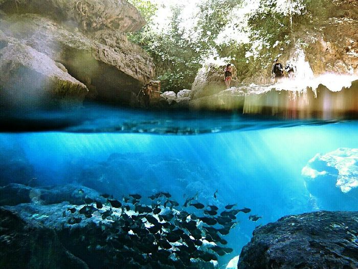 Saipan Grotto Beautiful Nature Fishes サイパン グロット