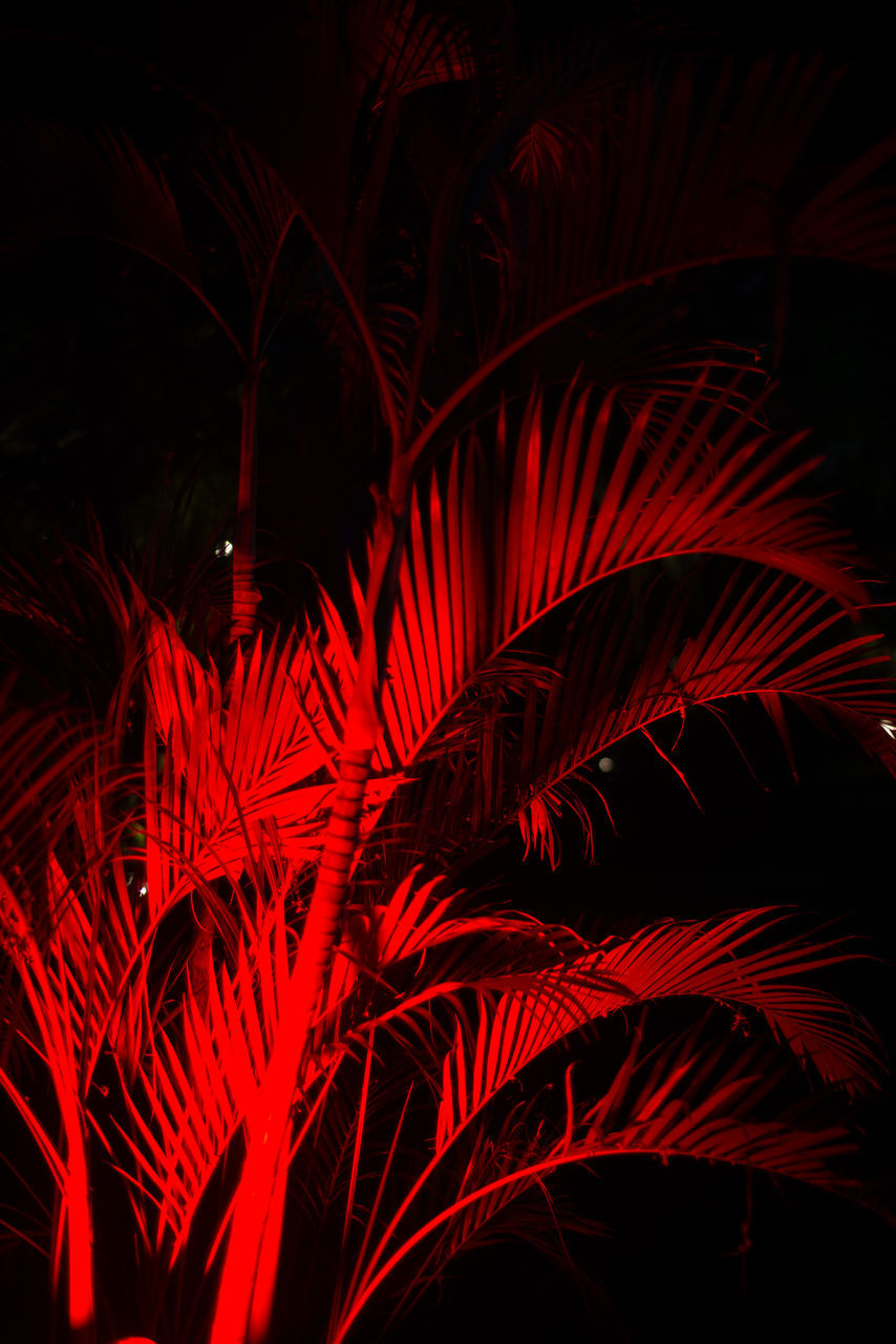 night, red, growth, celebration, no people, outdoors, illuminated, nature, beauty in nature