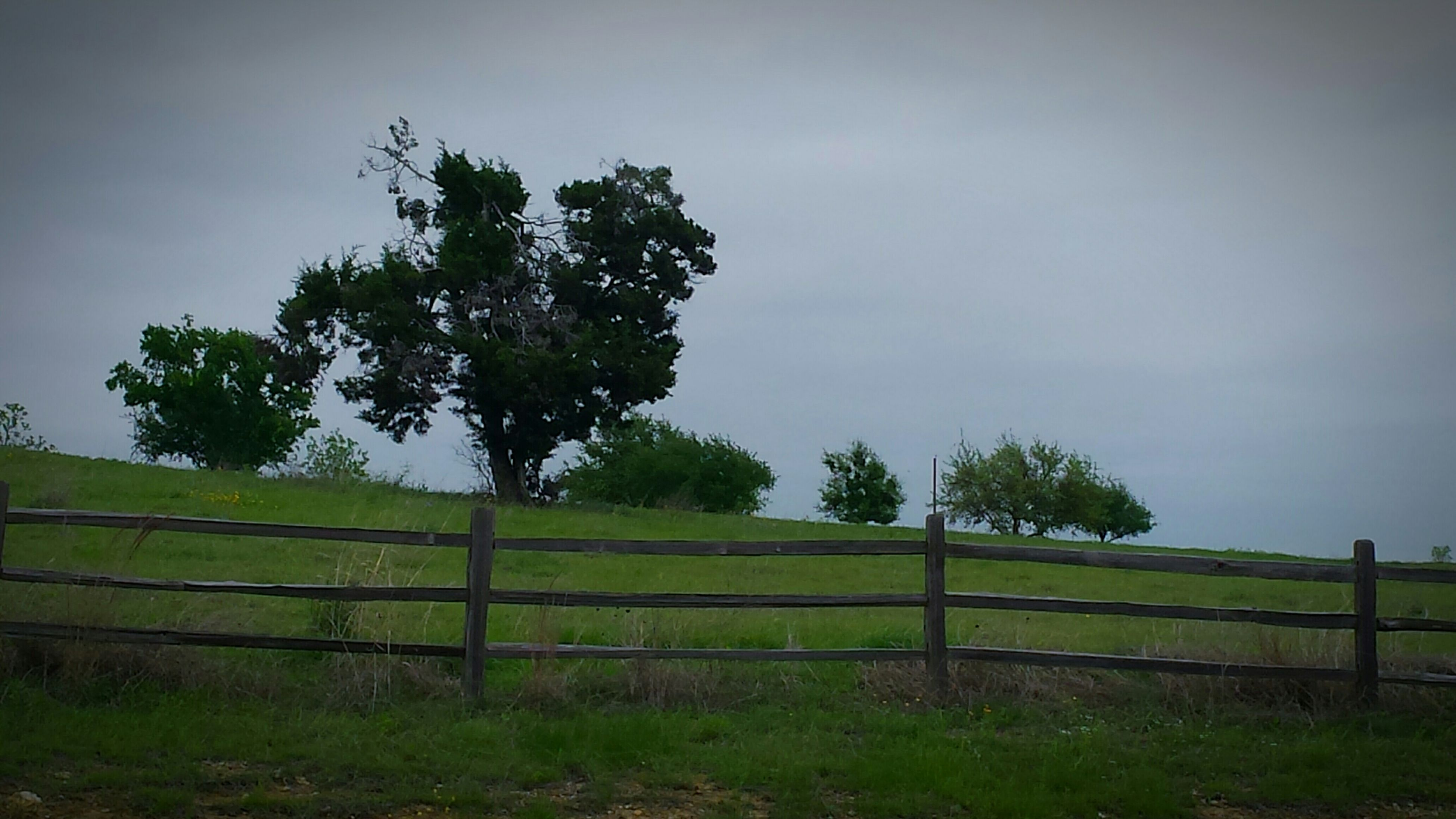 fence, tree, sky, field, tranquility, landscape, grass, railing, tranquil scene, growth, nature, beauty in nature, protection, green color, grassy, scenics, no people, outdoors, clear sky, day