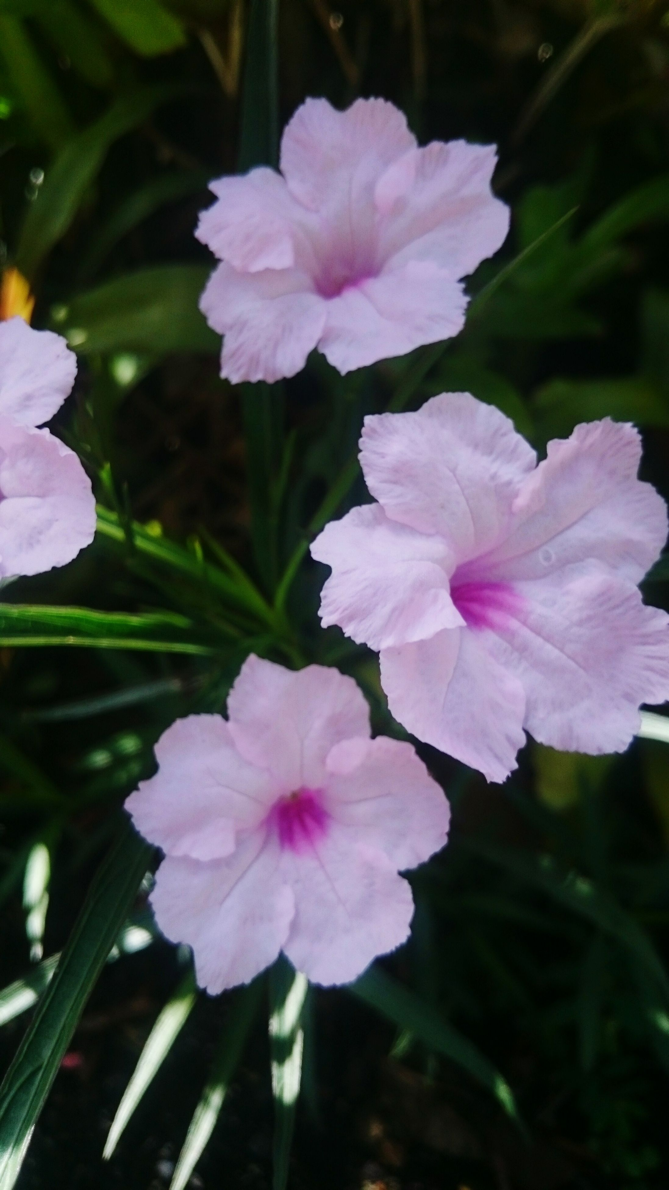 flower, petal, freshness, fragility, flower head, pink color, growth, beauty in nature, close-up, blooming, focus on foreground, nature, in bloom, plant, park - man made space, blossom, outdoors, day, leaf, no people