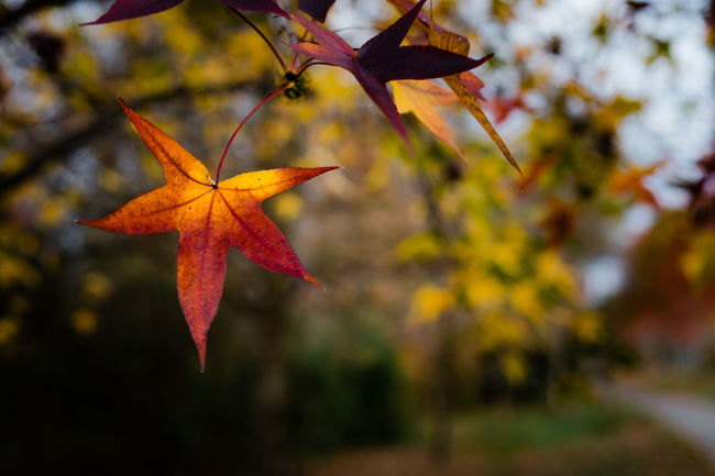 The last of the Autumn Colors Autumn Beauty In Nature Botany Close-up Day Depth Of Field Focus On Foreground Fragility Freshness Growing Growth Leaf Nature No People Plant Selective Focus Stem