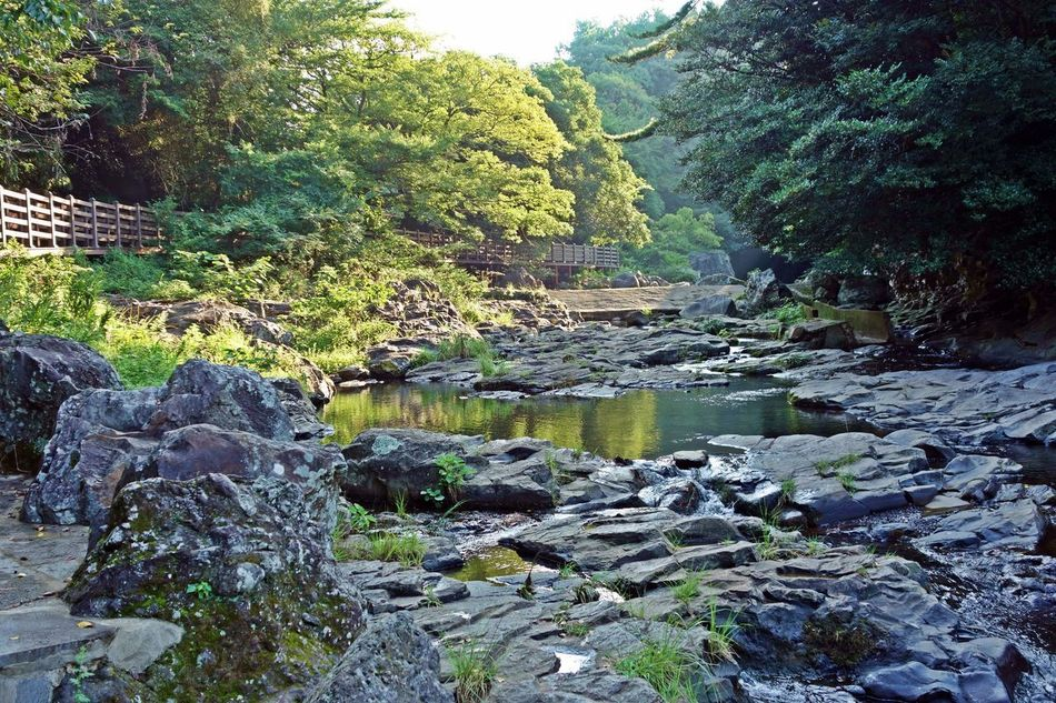 a Andeok valley scenery,jeju island,korea,asia Air Andeok ASIA Beautiful Evergreen Forest Fresh Grasses Green Island Jeju Korea Nature Rocks Serene Sky Stones Stream Tranquility Travel Tree Trip Valley View Water