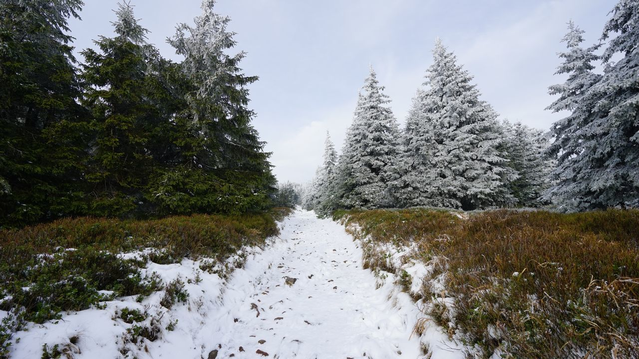 Beauty In Nature Czech Republic Forest Landscape Nature No People Outdoors Pine Tree Scenics Sky Snow Time Between Autumn And Winter Tree Way To The Top Winter