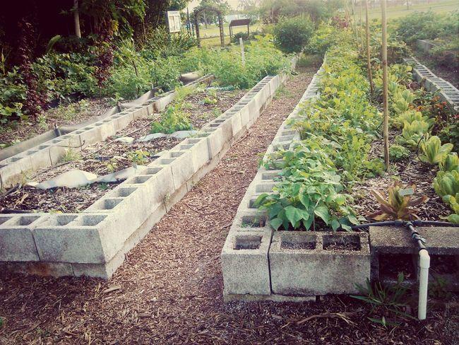 Eyemnaturelover Nature Garden