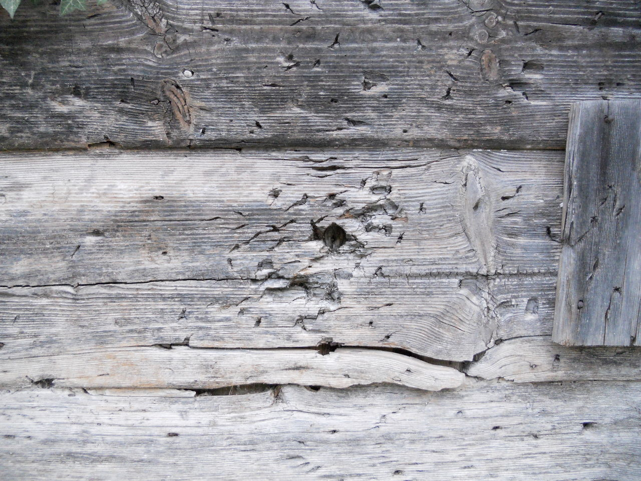 wood - material, textured, weathered, backgrounds, no people, wood grain, close-up, nature, outdoors, day, animal themes, mammal
