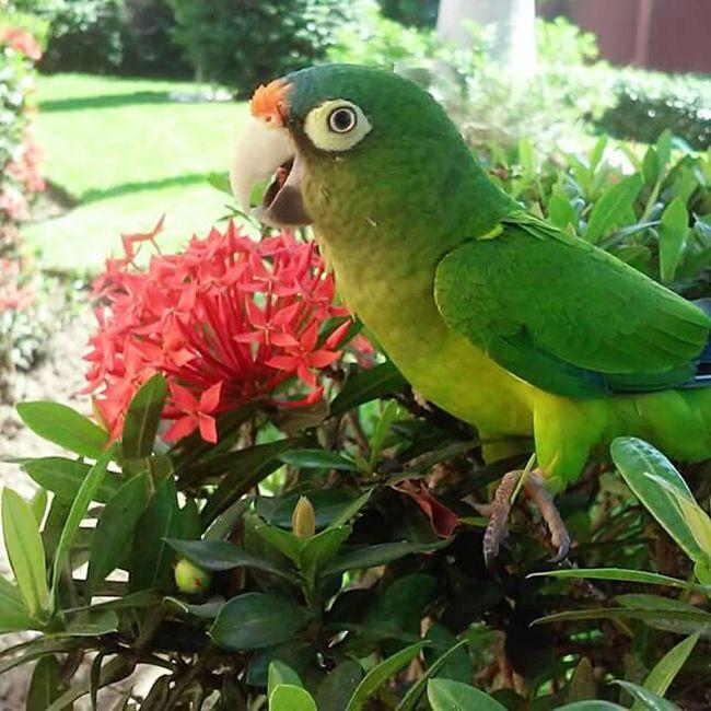 Poli Bird Beauty In Nature Mexico Y Su Naturaleza Belleza Natural Zihuatanejo
