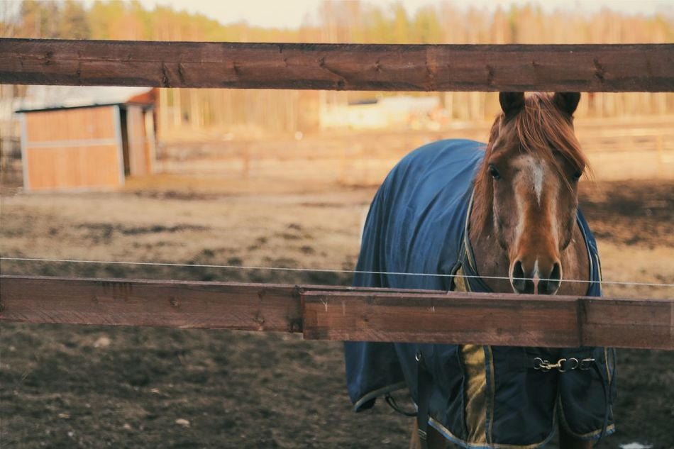 Beautiful stock photos of pony, Agriculture, Animal Themes, Close-up, Cover