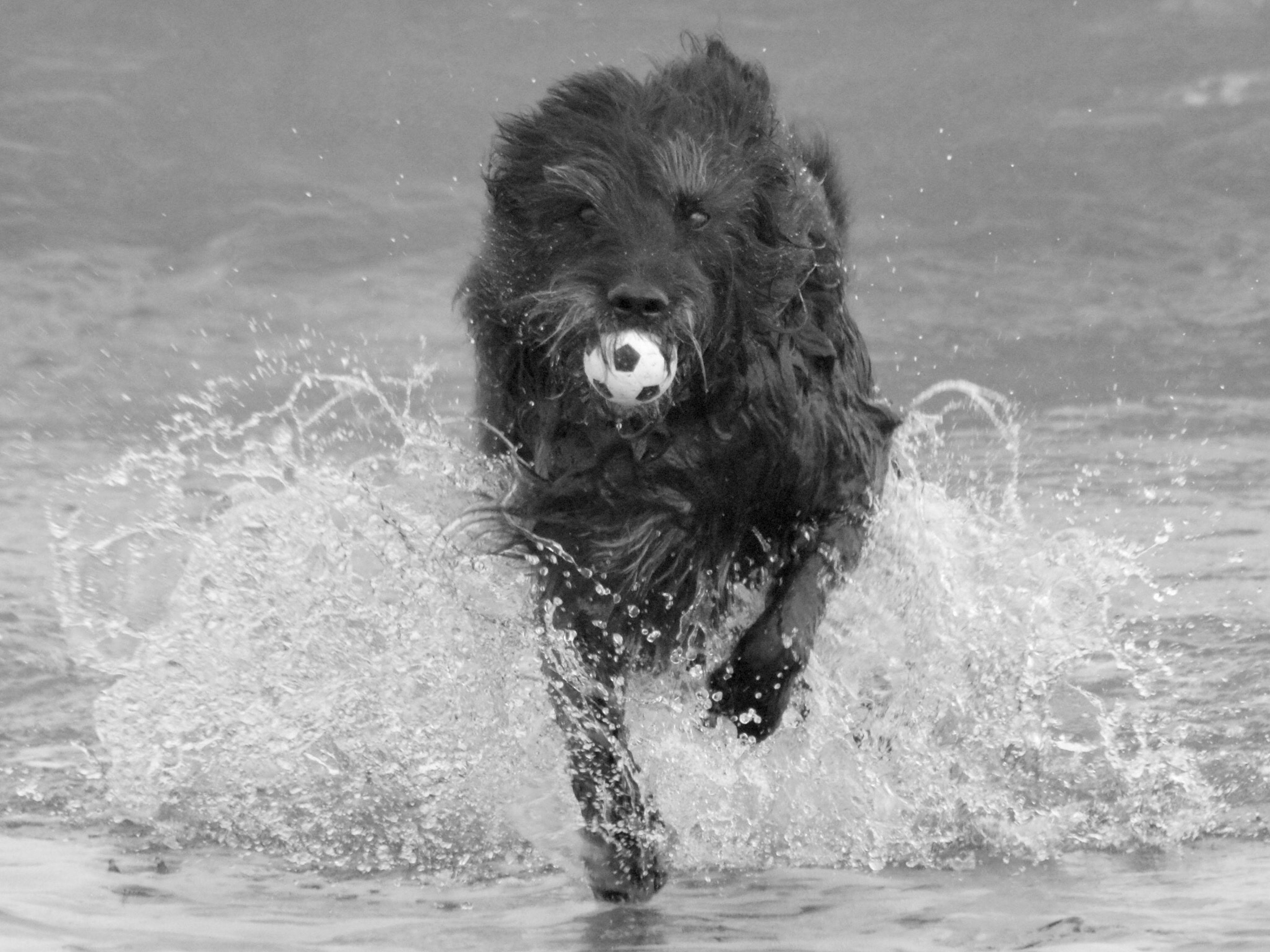animal themes, splashing, one animal, water, domestic animals, dog, mammal, motion, swimming, waterfront, pets, no people, outdoors, nature, day