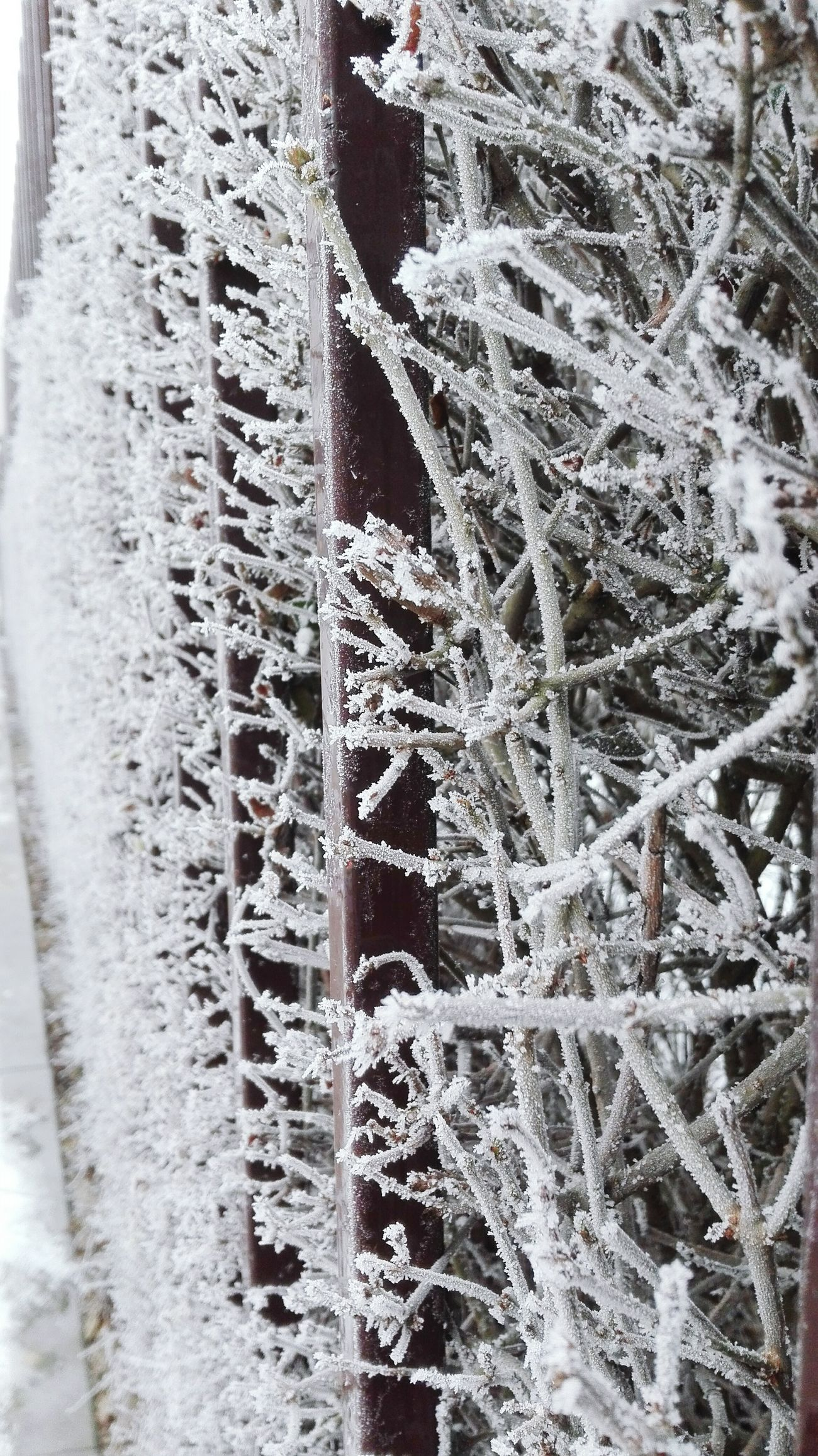 Cold Temperature Winter Nature No People Snow Day Beauty In Nature Frosted Glass