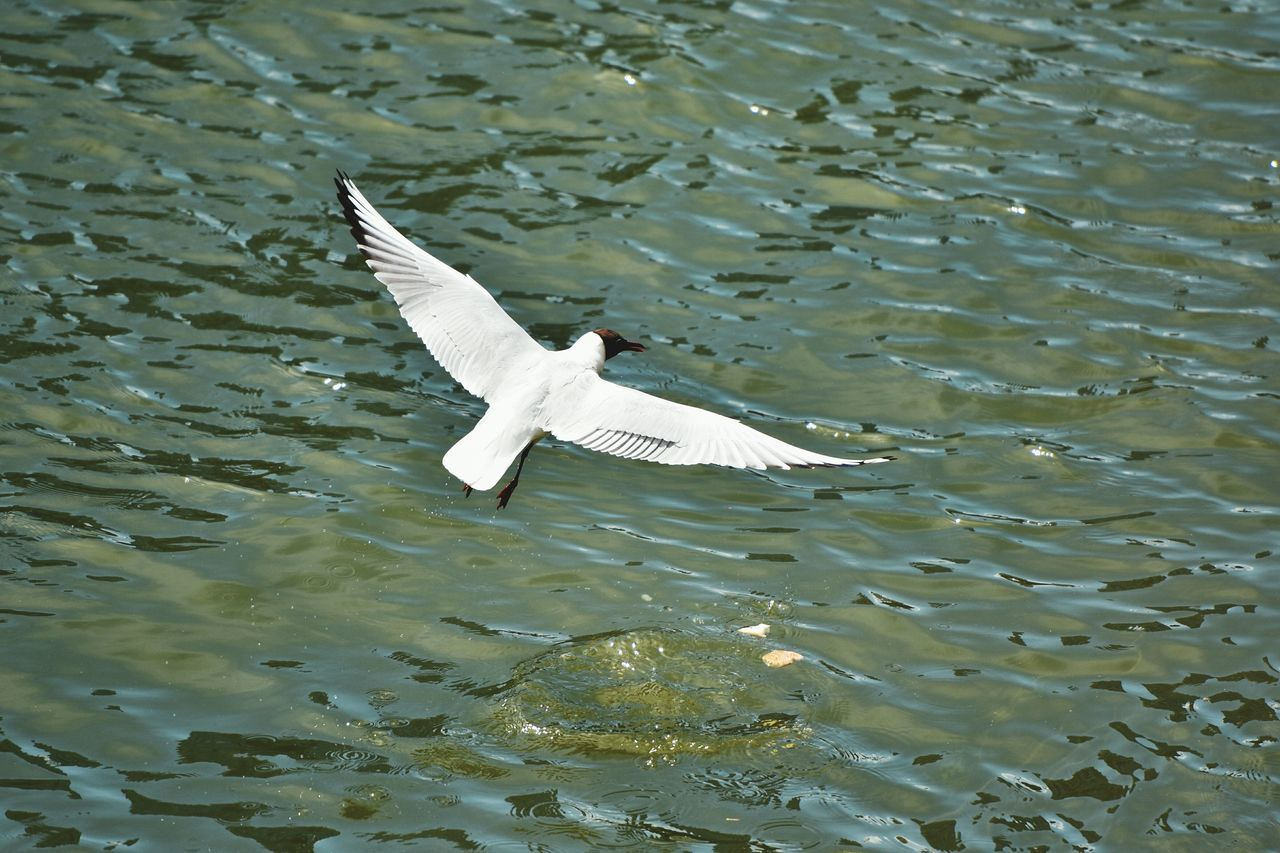 View Of Bird Flying Over Rippled Water