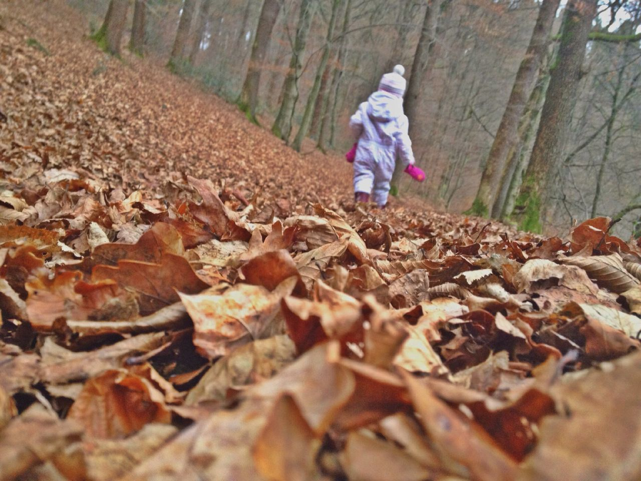 Rear View Of Child Walking On Street Covered With Dry Leaves In Forest