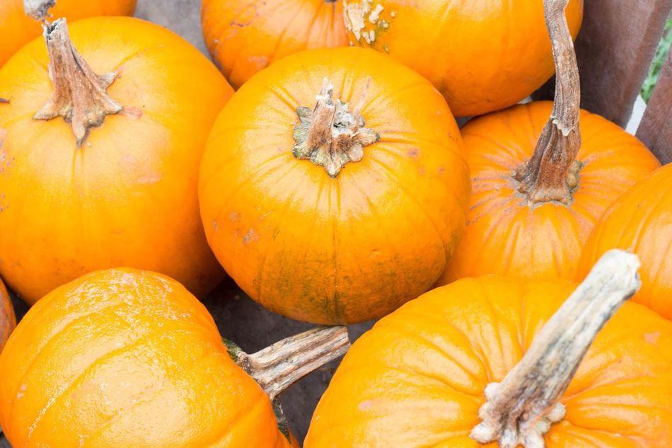 Pumpkins Fall Colors Fall New England  New Hampshire Autumn Season