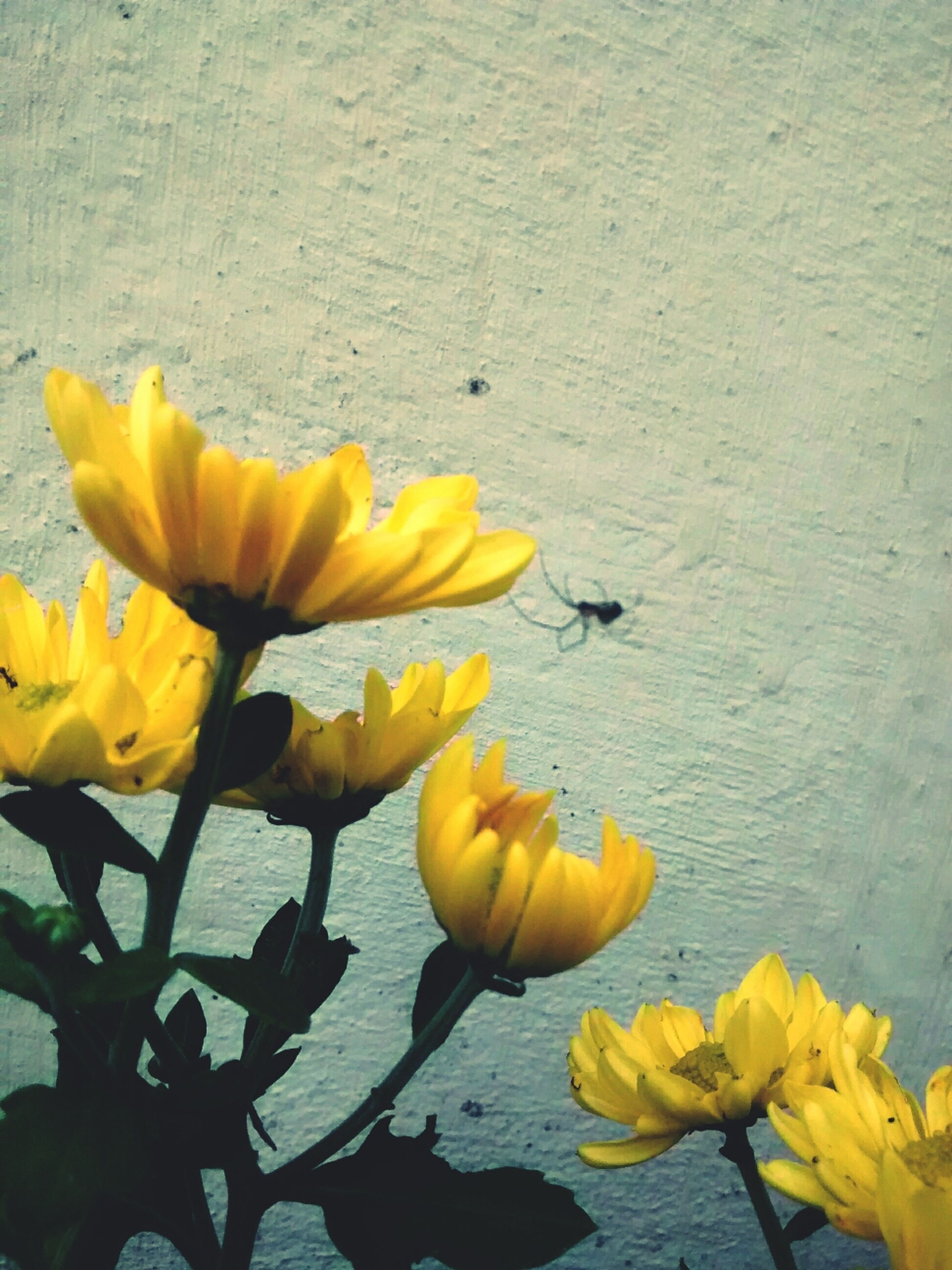 flower, yellow, petal, freshness, fragility, flower head, plant, leaf, growth, blooming, stem, nature, beauty in nature, wall - building feature, close-up, in bloom, day, tulip, no people, outdoors