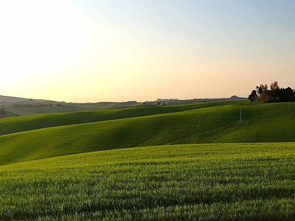 Green Green Color Panorama Nature Like Like4like Likeforlike Likeforfollow Hill Igers Igerstoscana Igersitalia Igerspisa Tranquility Tranquil Scene