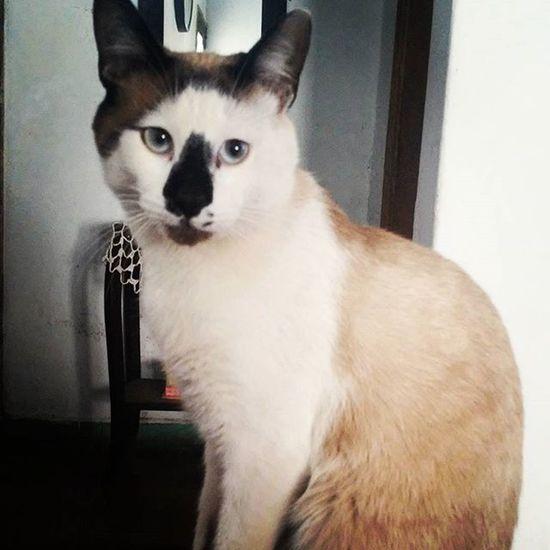 Ghost Catsofinstagram Kitten Catslover Gatobello
